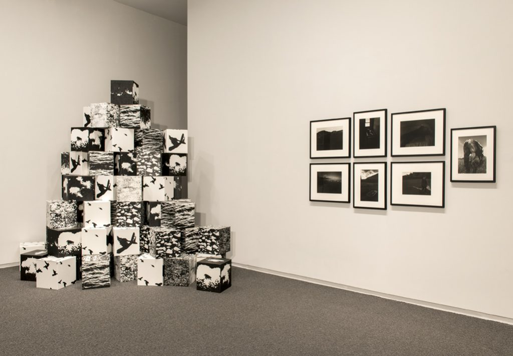 Micheal de Courcey, Untitled, 1970. Judith Eglington, Living Creatures series, c. 1970