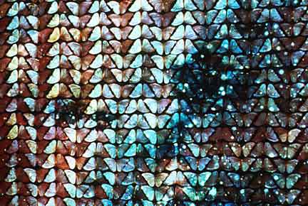 "Christine Davis, ""DRINK ME"", 2005, projection still"