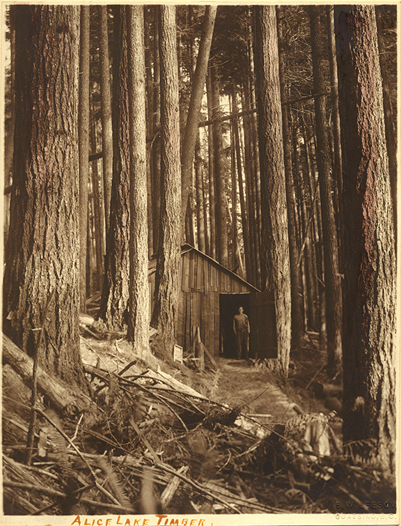"Ben W. Leeson, ""Alice Lake Timber,"" c.1890, hand-tinted gelatin silver print (1079)"