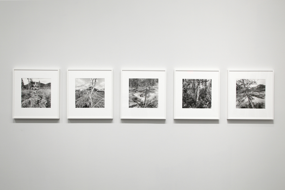 Canadian Rockies, Lee Friedlander: Thick of Things