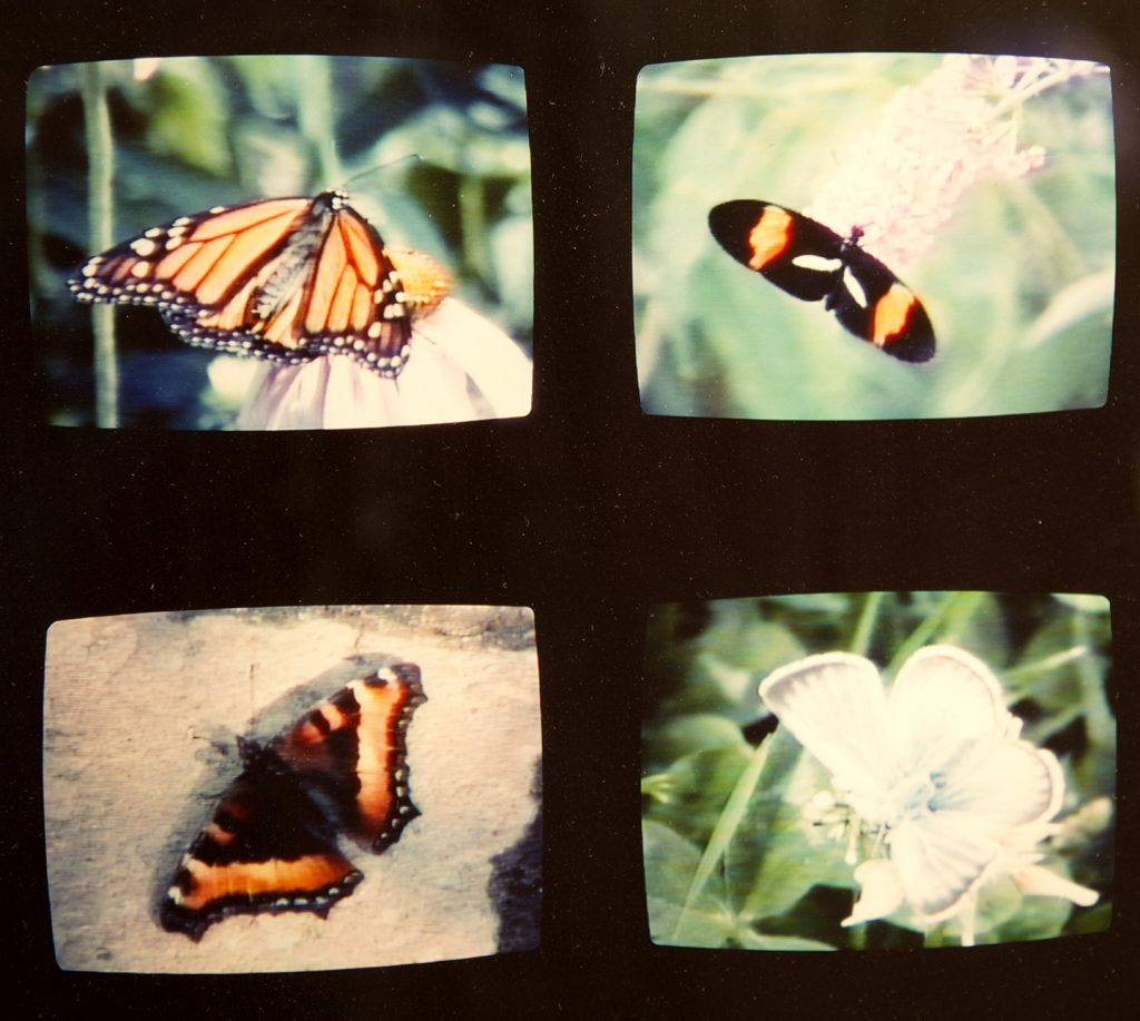 Mike MacDonald, Butterfly, 1996. C-print. (detail)