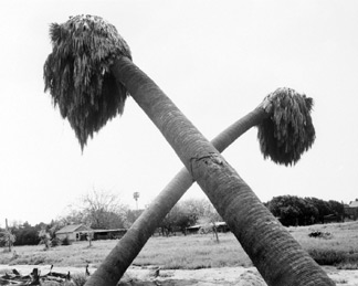 Robert Adams, Dead Palms Parially Uprooted,  Ontario, California, 1983