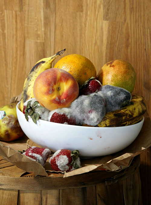 Roe Ethridge, Old Fruit