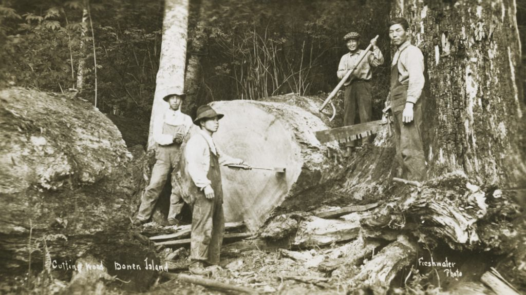 "Freshwater Photo, ""Cutting Wood, Bowen Island,"" c. 1900, postcard (1040)"