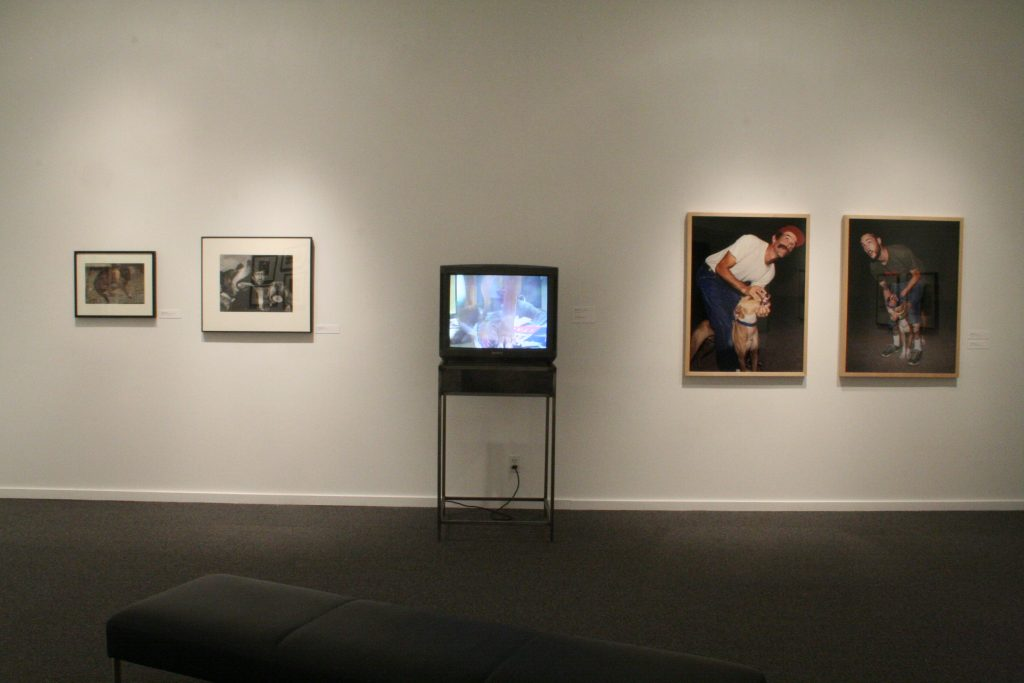 To The Dogs, installation view