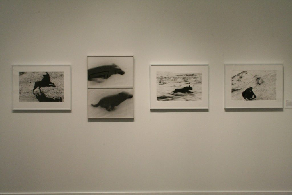 To The Dogs, installation view (John Divola)
