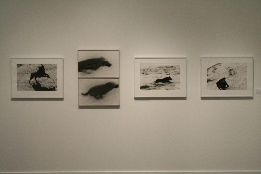 To The Dogs, installation view (John Divola)