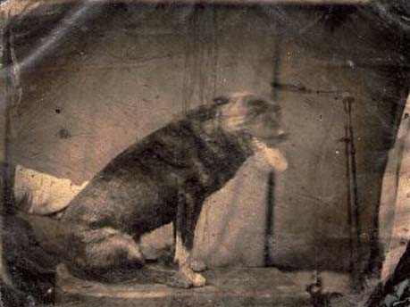 To The Dogs tintype