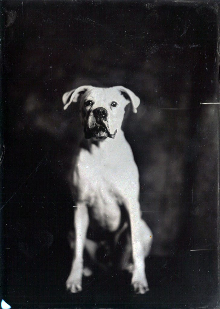 Geoffrey Wallang, Bruce, 2018. Contemporary tintype. Courtesy the artist