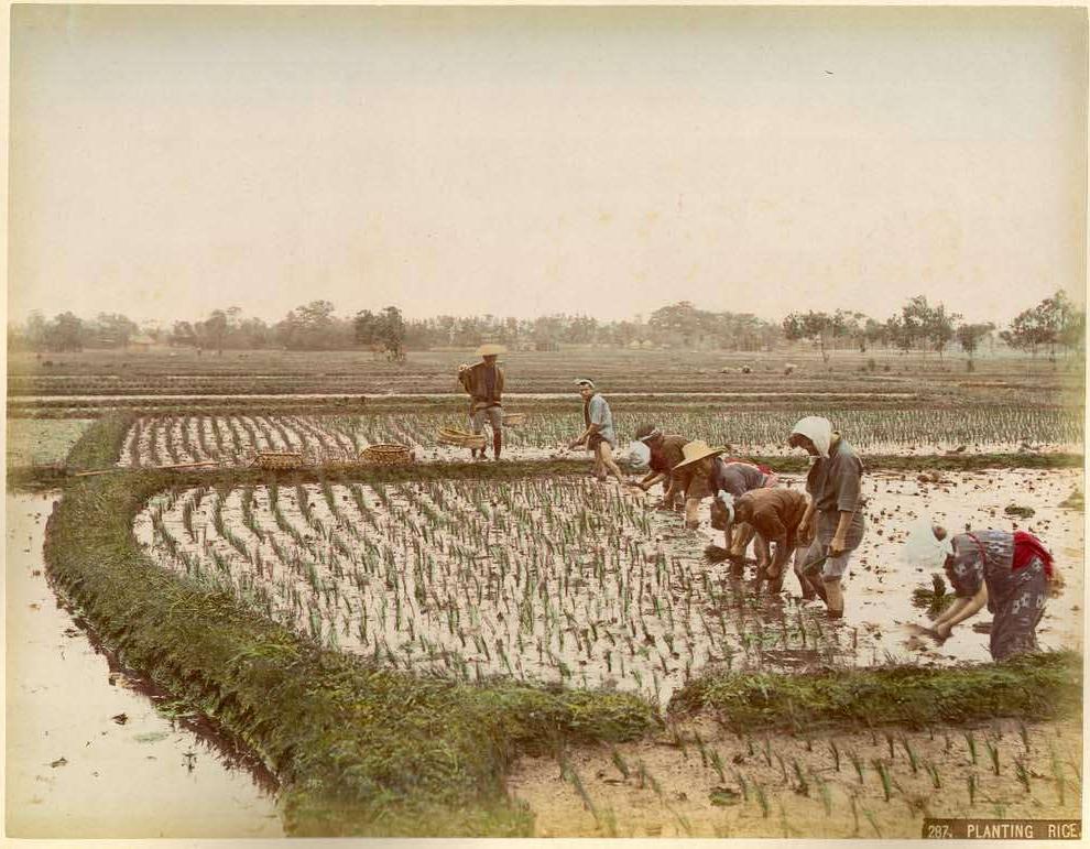 Kusakabe Kimbei, Planting Rice, c. 1880.  Hand-colored albumen print