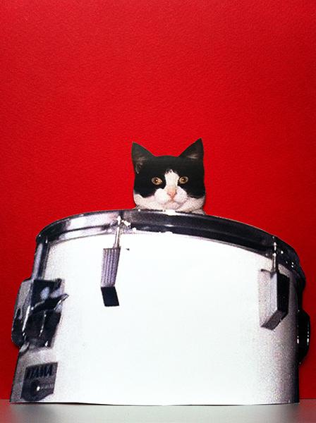 Steven Shearer - Self Plaster Catdrum
